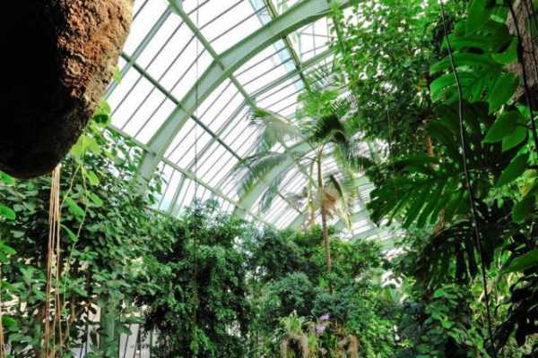 This is a picture of the interior of la grande serre of le jardin des plantes in Paris.