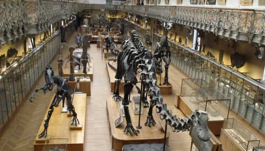 The is the interior of the museum d'histoire naturelle at Paris.