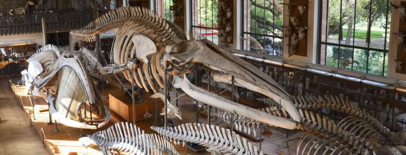 The is a picture of the interior of the museum d'histoire naturelle at Paris.