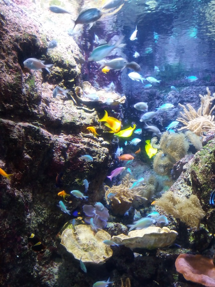 The Aquarium de Paris is an indoor attraction in Paris.