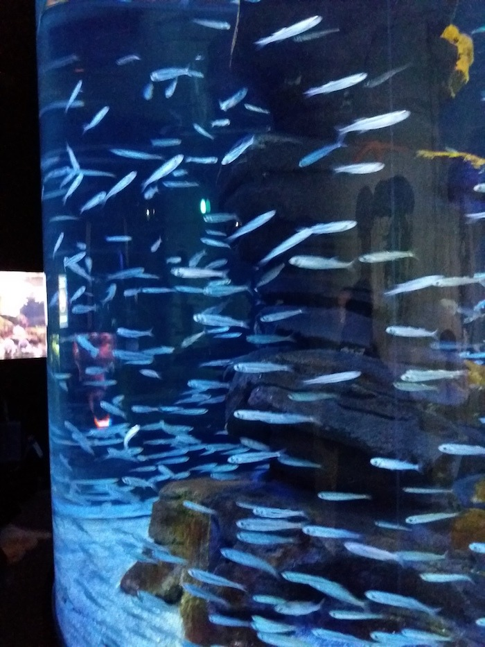 The Aquarium de Paris is an indoor attraction in Paris.
